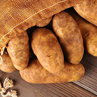 Simply Seed - Russet Burbanks - Organic Grown Seed Potatoes - 5 LBS - Ready for Fall Planting