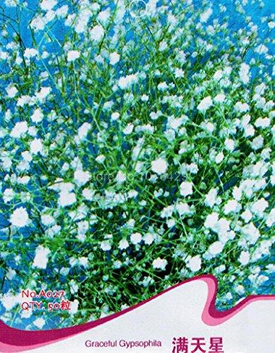 Agraciada Gypsophila Gypsophila Elegans Babysbreath Flor Plantas A027