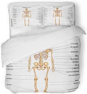 MIGAGA Decor Duvet Cover Set Full/Queen Size Anatomy Medical Education Chart of Biology for Human Skeleton Diagram 3 Piece Brushed Microfiber Fabric Print Bedding Set Cover