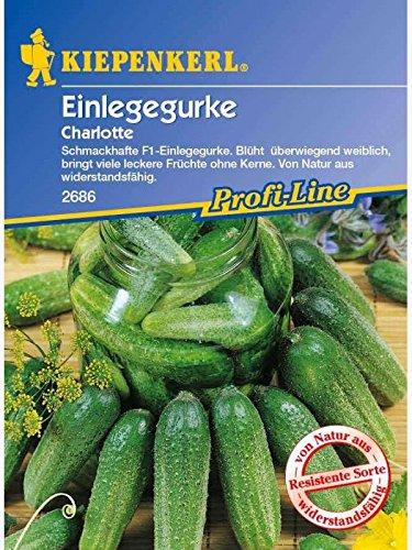 Einlegegurken Charlotte F1, Inhalt reicht für ca. 35 Pflanzen, bitterfrei, Ideal zum einlegen, auch als Schmorgurke zu Fleischgerichten verwendbar