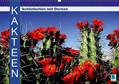 Kakteen: Schönheiten mit Dornen (Wandkalender 2019 DIN A2 quer): Kakteen: Bizarre Überlebenskünstler (Monatskalender, 14 Seiten ) (CALVENDO Natur)