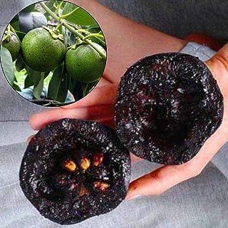 10個の入りレアカキノキDigynaブラックサポテ柿チョコプディングフルーツ種子