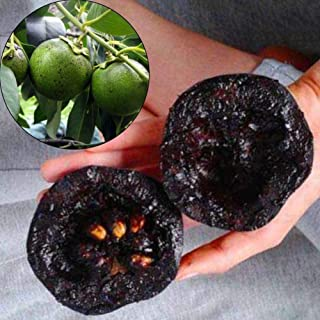 black sapote fruit