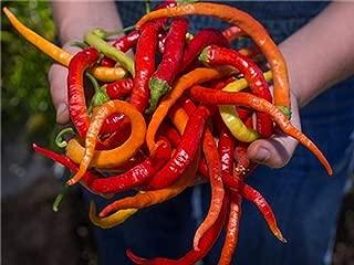 Best turkish pepper seeds Reviews