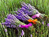 Semillas de lavanda Hidcote - Lavandula angustifolia - 300 semillas