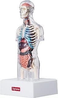 Best anatomy model supreme Reviews