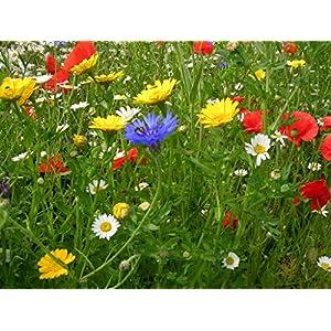 Pure Cornfield Annual Standard Native UK Wildflower Pretty Wild Seeds Seed Mix 100 Grams Mix 201 NO Grass