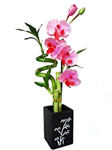 9GreenBox Lucky Bamboo Spiral Style Artificial Flowers and Ceramic Vase Live Plant Ornament Decor for Home, Kitchen, Office, Table, Desk Attracts Zen, Luck, Good Fortune Non-GMO, Grown in The USA