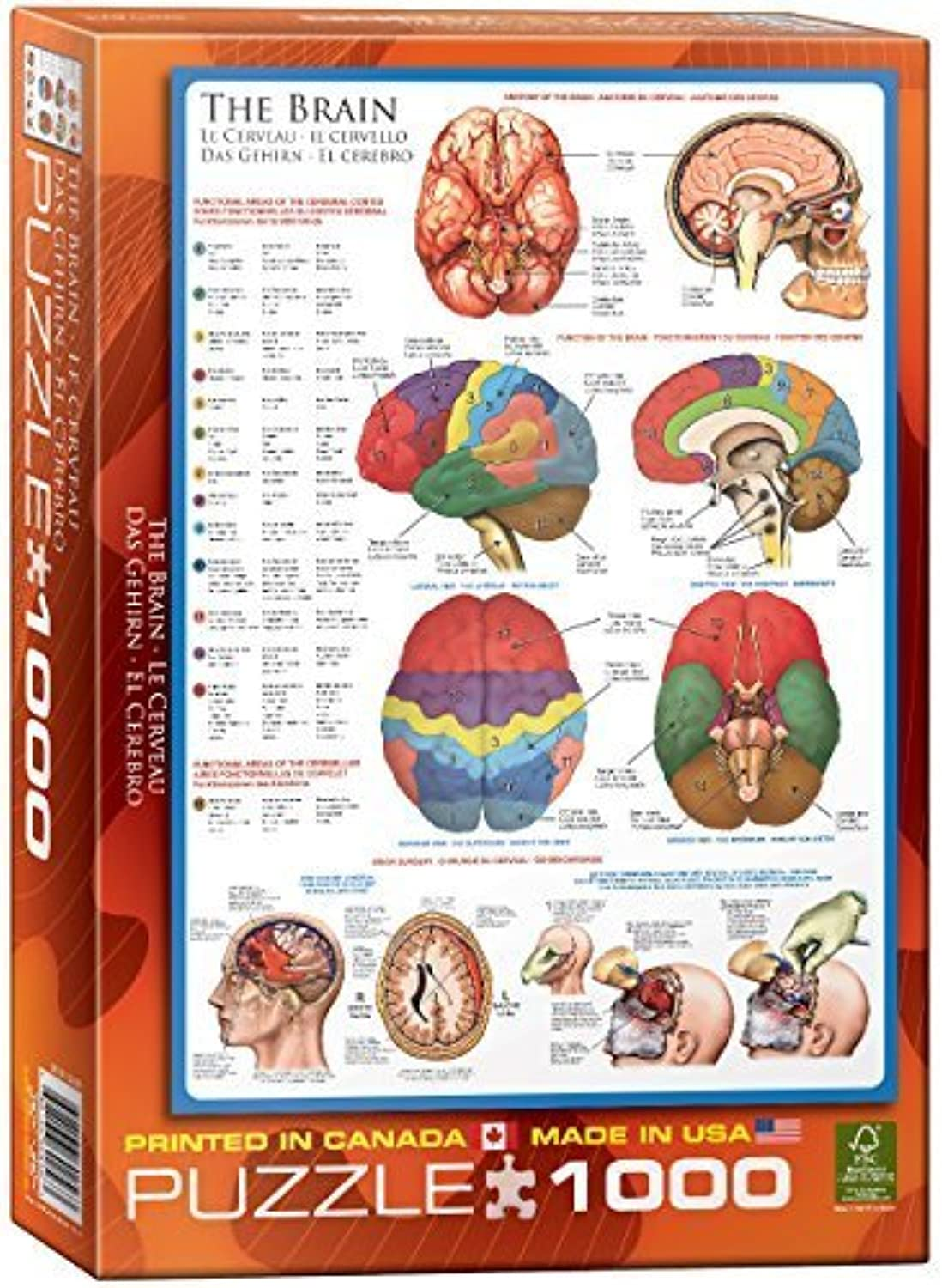 Eurographics the Brain Puzzle (1000 Pieces) by Eurographics