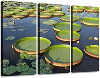 Majestic Amazon Lily Pads (Victoria Regia) Print On Canvas Wall Artwork Modern Photography Home Decor Unique Pattern Stretched and Framed 3 Piece