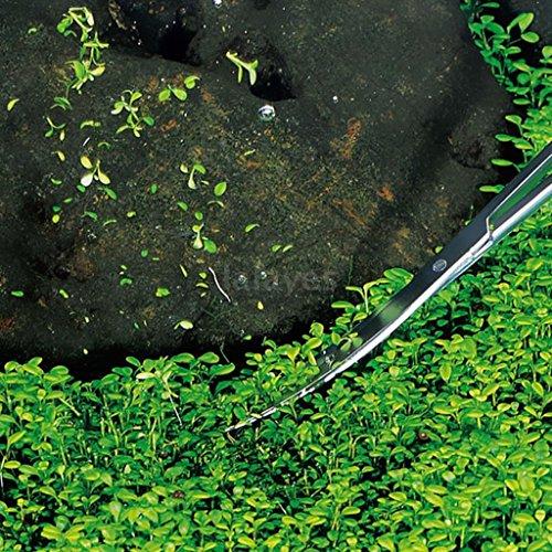 MERIGLARE Tijeras de Acuario de Acero Inoxidable para Limpiar La Hierba de La Planta de Agua