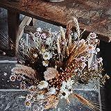 Dutch Masters in Dried Flowers Trockenblumenstrauß Creamy Pastel   EIN Hingucker in jeder Vase   Trockenblumen und Trockengräser Pastellfarben   65 cm   Deko Blumenstrauß - 2