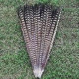 10 plumas de cola de faisán para manualidades o decoración