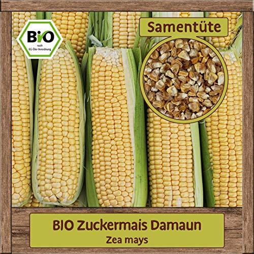 BIO Zuckermais Samen Damaun (Zea mays) extra süßer BIO Mais