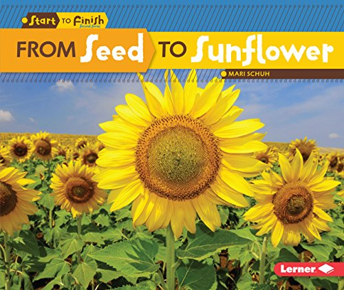 From Seed to Sunflower (Start to Finish, Second Series)
