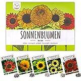 Semillas de girasol de colores con alta tasa de germinación - semillas de flores para un colorido y amigable jardín de abejas (set de 5)