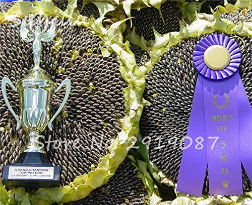 2017 Hot Sale Mongolian Giant Sunflower, 15 Seeds, Garden Sun Flower Seeds Ornaments Plant Sweet Foods Seeds, Natural Growth