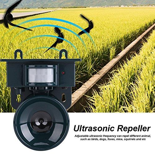 Ultrasone vogelafweer Dierenverjager, vogelafweer tegen vogels, ultrasone vogelafweer tegen vogels, ultrasone vogelafweer voor balkon, ramen en fruitbomen, ook