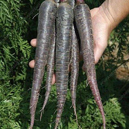 100 graines / l'unité Heirloom arc-en-Blanc Jaune Orange Violet Rouge carotte mélange de graines de légumes délicieux Graines de Bonsai de légumes verts