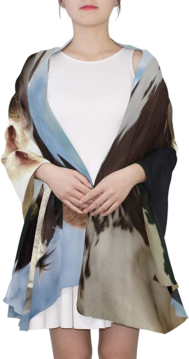 Black-and-white Dairy Cows Unique Fashion Scarf For Women Lightweight Fashion Fall Winter Print Scarves Shawl Wraps Gifts For Early Spring
