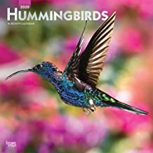 Hummingbirds 2020 12 x 12 Inch Monthly Square Wall Calendar with Foil Stamped Cover, Animals Wildlife Birds
