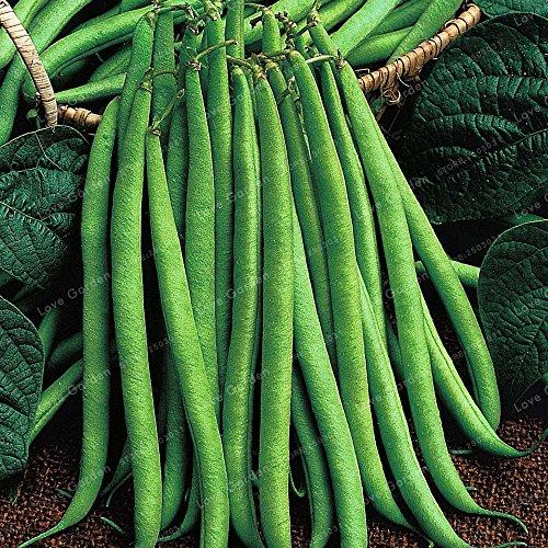 20 pcs / sac de haricots Graines bio délicieux Phaseolus vulgaris plante verte Semences-Nutrition non OGM Semences Potagères 3