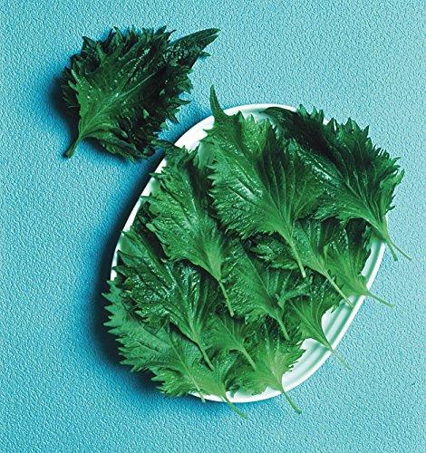 Il vous suffit de graines de salade???Perilla???? Shiso Vert???150?graines???Economy Lot