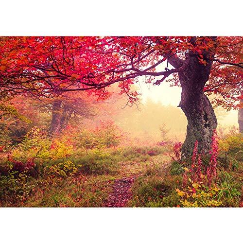 Fototapete 400x280 cm - ALLE TOPSELLER auf einen Blick ! Vlies PREMIUM PLUS - THE BEAUTIFUL TREE - Wald Bäume Herbst - no. 258
