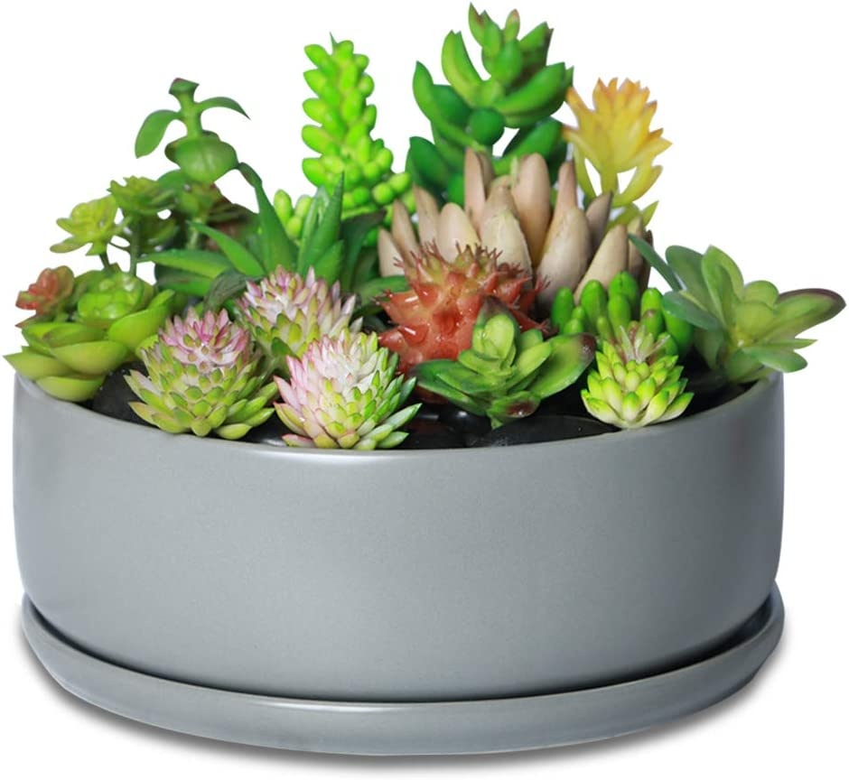 All stores are sold Gray Succulent Planter Indoor Flower Pot for Suc Plant Ranking TOP1 Container