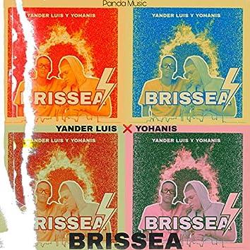 Brissea