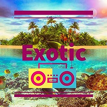 Exotic Reggaeton