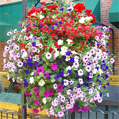 Aerlan Blüten Saatgut mehrjährig,Blumensamen mehrjährig,Petunien, Kletterpflanzen, Trompetenblumen, Samen-500g