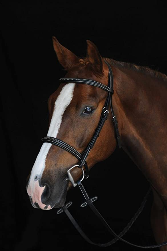 Horse Riding Gear for Beginners - for the horse