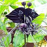 Swansgreen hermosas semillas de flores orgánicas 120seeds/bolsa de semillas de orquídeas raras semillas de flores bonsái de cultivo natural, planta para el jardín de fácil de cultivar 5