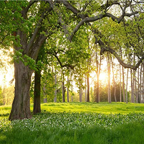 Mural Wallpaper 3D Wall Art Living Room Bedroom Sunny Woods Grassland - Photo Art Print Nature Landscape Cinema Wall Mural Decoration Hotel Poster Picture Design Wallpaper 400x280 cm - 8 Strips