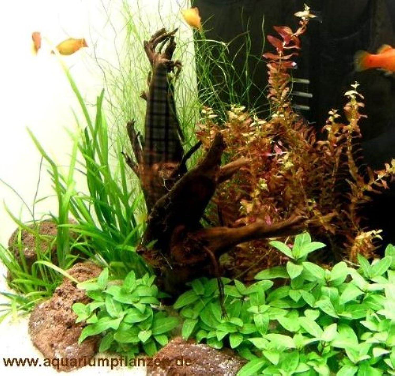 Nano VI Set 2030 l aquarium plants, gravel, decorative