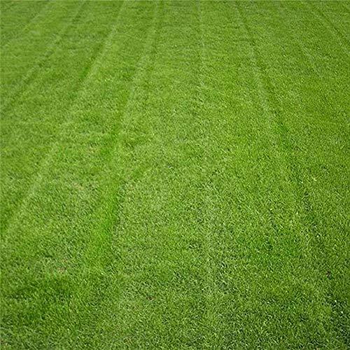 ASTONISH: Fescue alta Semilla de hierba verde Festuca Arundinacea Césped Campo Césped Semillas 10000X Gt