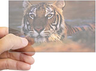 Best wildlife stickers for cars india Reviews