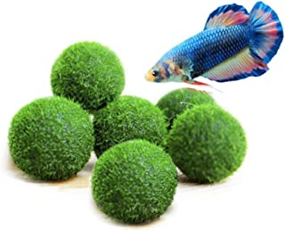 Luffy Betta Marimo Moss Balls, Jumbo Pack of Aesthetically Beautiful Plants, Create Healthy Environment for Aquatic Pets, Low Maintenance Live Plant, Shrimps & Snails Love Them