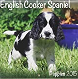 English Cocker Spaniel (Mini) 2015