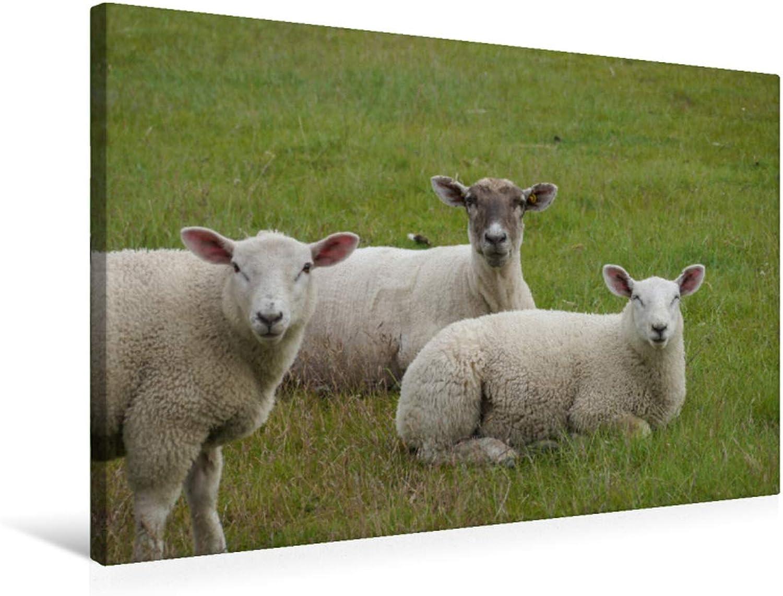 Premium Textile Canvas 75 x 50 cm Landscape Curious Sheep Family