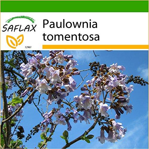 SAFLAX - Paulonia - 200 semillas - Con sustrato estéril para cultivo - Paulownia tomentosa