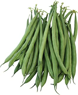 Burpee French Filet Bush Bean Seeds 2 ounces of seed