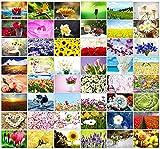 48 Blanko-Grußkarten mit Fotos i...
