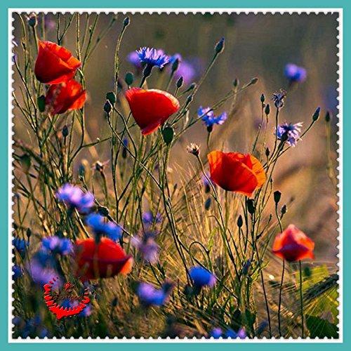 400 Très belle graines Mélange de fleurs s arôme de fleur Superbe riche de jardinage bricolage