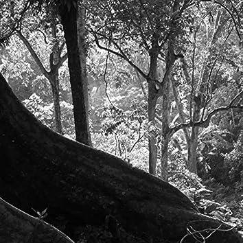 Old Pine (Demo)