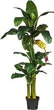 Best giant banana leaf plant Reviews