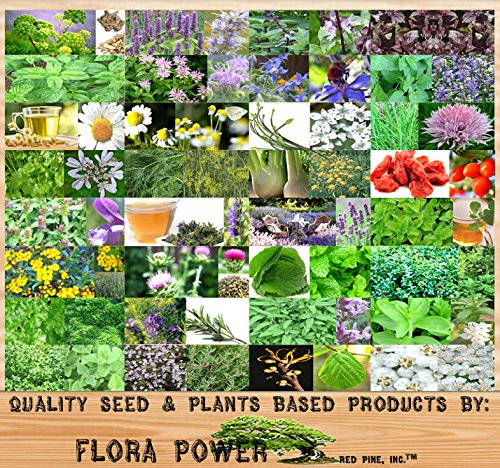 32 Types Medicinal & Culinary Herb Combo, Seeds - from Angelica to Yarrow- Seeds...