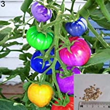 Potato001 200Pcs Rainbow Tomato Seeds Garden Organic Fruit Vegetable Plant Home Yard Decor