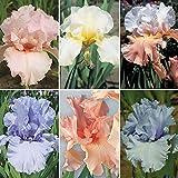 6 Mix Iris Bulbs Pretty Bearded Iris Special Offer Bonsai Roof Decoration Miniascape Summer Flowering Garland
